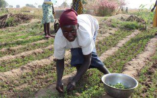 Visite d'un projet : «Femmes & environnement» au Togo