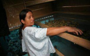 Appui à la valorisation du travail et du rôle des femmes au Guatemala