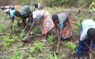 Développement rural et soutien de l'autopromotion paysanne