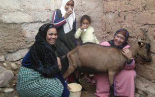 Installation d'élevages de chèvres, lapins, moutons et abeilles à Ouarzazate