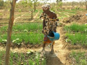 Renforcer les compétences et les capacités des femmes maliennes dans la production et la transformation des produits maraichers afin de favoriser la sécurité alimentaire