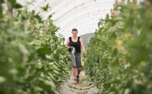 Promouvoir le travail des femmes dans l'agriculture biologique