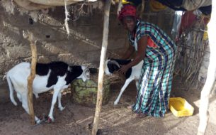 Professionnalisation et soutien à l'entrepreneuriat des femmes éleveuses de la région de Matam