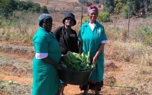Une agriculture durable pour sécuriser l'alimentation des communautés vulnérables de Piggs Peak