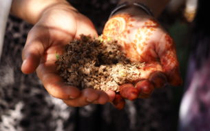 Développement des pratiques agro-écologiques des femmes du sud marocain (phase 2)