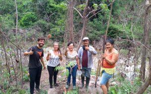 Restauration forestière, Noyer Maya et adaptation au changement climatique