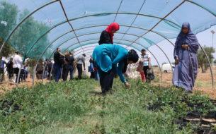 Formation d'agricultrices à l'agro-écologie pour promouvoir l'adaptation au changement climatique dans les zones semi-arides/arides de Méditerranée