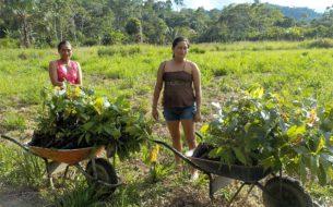Reforestation participative en Amazonie équatorienne et valorisation des productions agricoles issues des parcelles reforestées