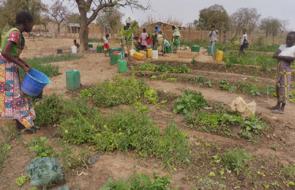 Autonomisation des femmes de Mèkoungo, vecteur de développement durable et de sécurité alimentaire