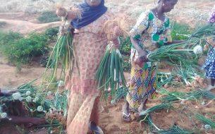 Former les jeunes femmes aux pratiques agroécologiques et à la commercialisation de leurs produits
