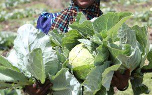Accompagner les femmes vers des modes de production agricole durables et les appuyer dans la création d'une coopérative