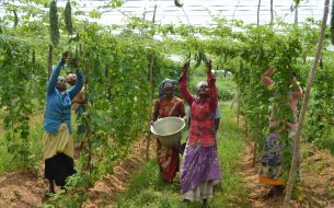 Soutenir des agricultrices vivant sous le seuil de pauvreté tout en favorisant l'adoption de pratiques agricoles durables en zone rurale