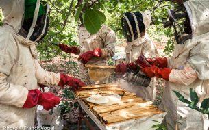 Former des femmes rurales au métier d'apicultrice et préserver la biodiversité de la zone grâce à l'activité des abeilles